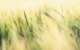 Картинка поле, трава, свет