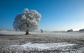 Картинка зима, иней, поле, пейзаж, дерево, Природа