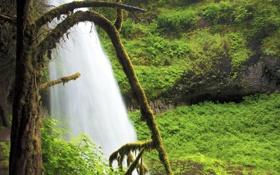 Обои природа, дерево, водопад