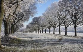 Обои зима, снег, деревья, природа, фото, аллея