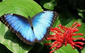 Обои nature, flower, бабочка, листок, butterfly, цветок, природа