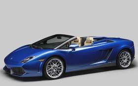 Обои синий, галлардо, передок, spyder, 550-2, спайдер, суперкар
