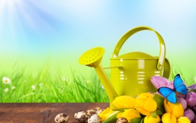 Картинка зелень, трава, бабочка, доски, ромашки, яйца, желтые