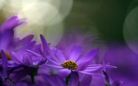Обои природа, макро, цветы
