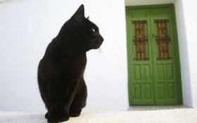 Обои кошка, дом, улица, дверь, черный кот