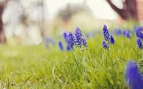 Обои природа, лето, цветы
