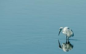 Обои вода, природа, птица