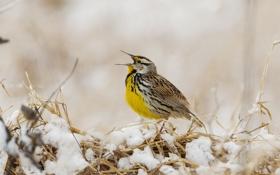 Картинка зима, трава, снег, птица, клюв