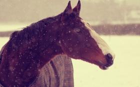 Обои зима, снег, лошадь