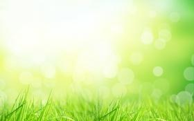 Обои травка, солнечные лучи, nature, sun, природа, grass