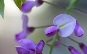Картинка природа, дерево, цветки, сиреневые, вистерия