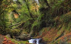 Обои лес, деревья, река, камни, заросли, мох, чаща