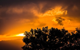 Картинка облака, пейзаж, ветки, дерево, звкат, листья. силуэт
