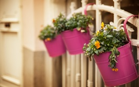 Обои цветы, забор, горшок, горшки