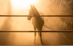 Картинка свет, фон, конь