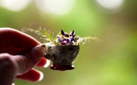 Обои цветок, макро, рука, кружка, пальцы