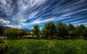 Картинка небо, трава, облака, деревья