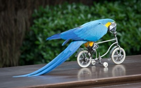 Картинка велосипед, птица, попугай, ара