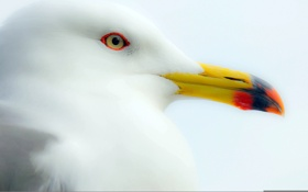 Обои фон, птица, чайка, клюв