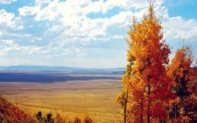 Обои поле, осень, облака, деревья, листва, вид, желтая