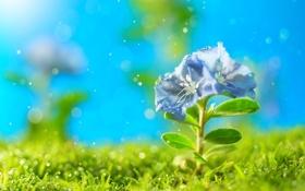 Обои петунья, цветок, искры, трава