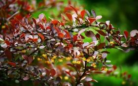 Обои листья, капли, цветы, куст, весна, боке