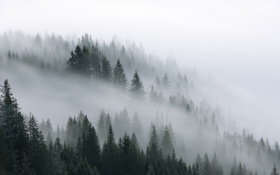 Обои лес, природа, туман