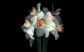 Картинка свет, цветы, тень, букет, лепестки, стебель