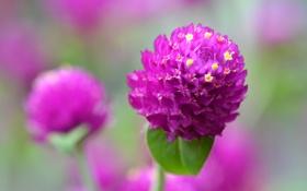 Обои цветок, природа, лист, растение