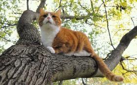Обои кошка, кот, природа, дерево, рыжий