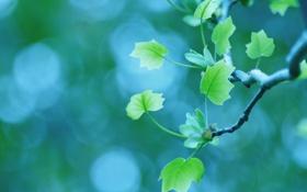 Обои макро, листва, ветка, весна, боке