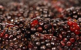 Обои макро, ягоды, macro, ежевика, berries