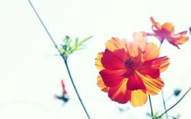 Картинка солнце, лучи, растение, растения, Цветок, лепестки, nature
