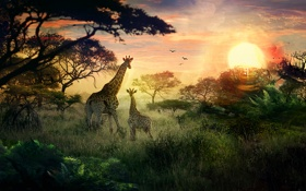 Обои солнце, закат, природа, жирафы, детеныш, сафари