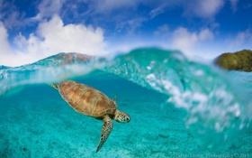 Обои вода, океан, черепаха, подводный мир