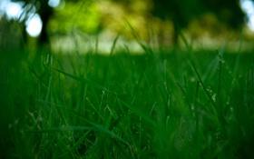 Обои поляна, зелень, трава