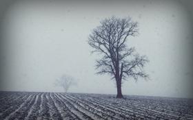 Картинка пейзаж, поле, дерево, туман, стиль