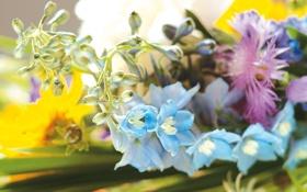 Обои цветы, фото, обои, букет, весна, ярко, нежно