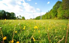 Картинка поле, лето, небо, трава, цветы, природа, одуванчики