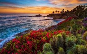 Обои California, Laguna Beach, sunset