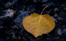 Обои осень, капли, макро, лист