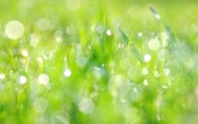 Обои зелень, лето, трава, брызги