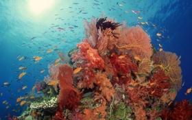 Обои рыбы, риф, коралл