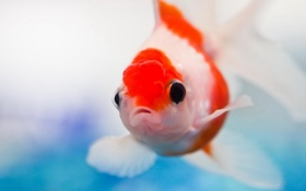 Картинка желание, аквариум, рыбка