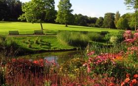 Картинка пруд, парк, фото, дерево, поляна, забор