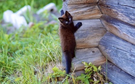 Обои кот, кошки, дерево, обои, стена, природа. фон, взбирается