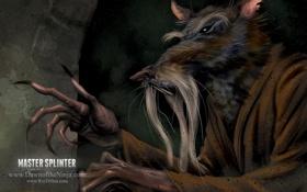 Обои TMNT, rat, master splinter
