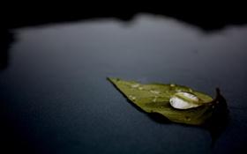 Обои поверхность, листок, капля