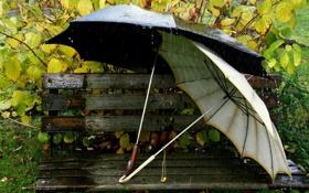 Картинка вода, скамейка, дождь, зонт, листя