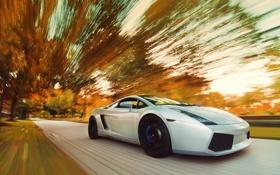 Картинка дорога, осень, скорость, Lamborghini, Gallardo